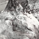 Cápsulas de Placenta – Placentofagia